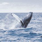 שחררו את ווילי: לא הלווייתן הקפיץ את ביטקוין ב-2017